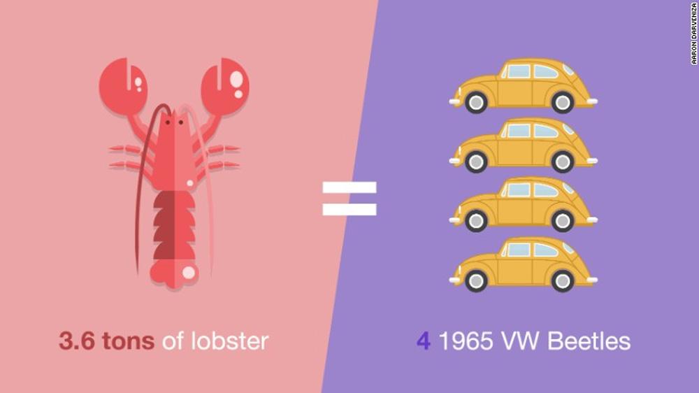 3.6 tonnes of lobster equals 4 1965 VW Beetles